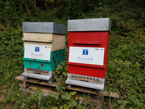 Les ruches des Editions Tissot